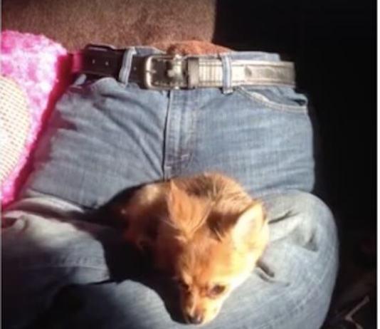 Του σκύλου το κρεβάτι