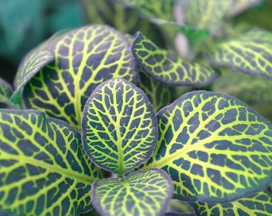 Φυτά εσωτερικού χώρου - σωστή περιποίηση