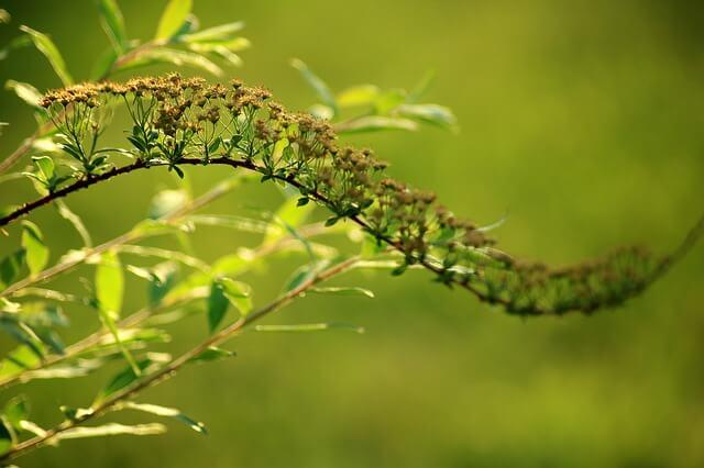 Φτιάξτε εντομοκτόνο και απωθήστε τα ζουζούνια από τα φυτά