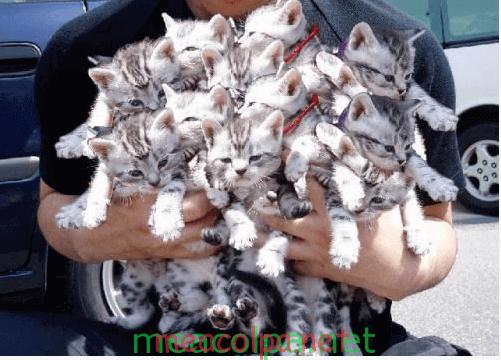 Μια αγκαλιά γάτες