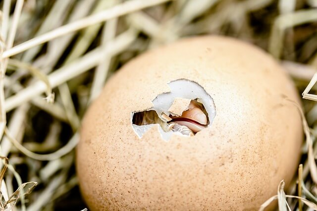 Για να καταλάβεις αν είναι φρέσκο το αβγό