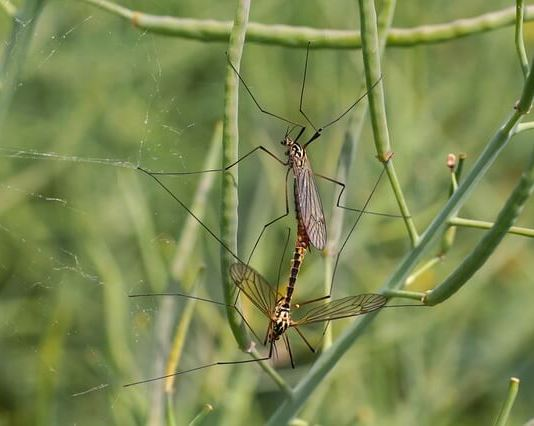 Απώθησε τα κουνούπια