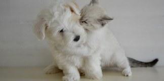 Το σκυλάκι και το γατάκι