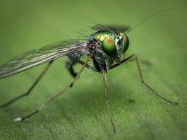 Αποφύγετε τα έντομα στη βεράντα