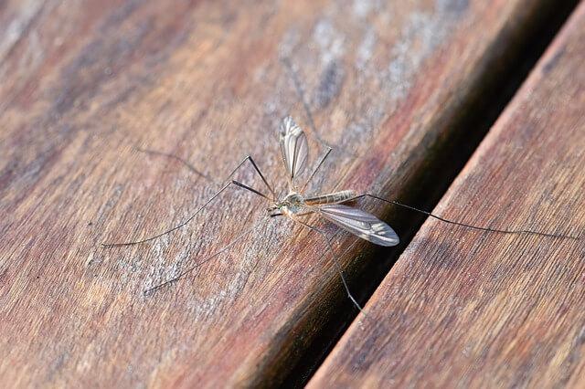 Η πρόταση μιας 12χρονης για να διώξετε τα κουνούπια