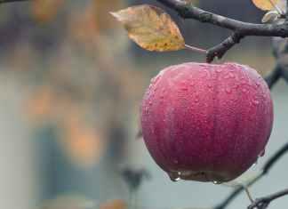 Για καλή υγεία, τρώμε φρούτα