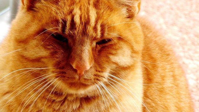 Γάτοι, γατούλες και γατόνια