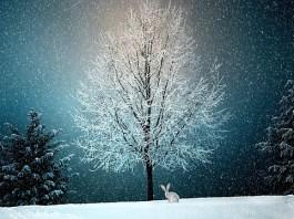 Φτιάξε εντυπωσιακές Χριστουγεννιάτικες κάρτες