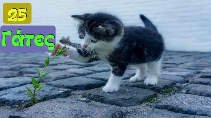 Γάτες είναι, ότι θέλουν κάνουν!