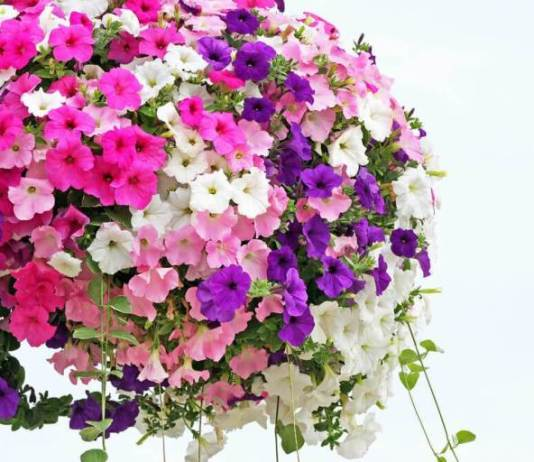 30 λουλουδοσυνθέσεις για να γίνει η ζωή σας πιο όμορφη
