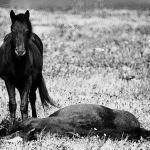 13 φωτογραφίες σε άσπρο - μαύρο του Βλαδίμηρου Λαγκράνζ