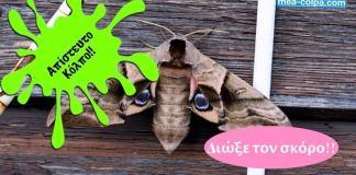 Ο άλλος - απίστευτος - τρόπος για να διώξεις τον σκόρο ΟΙΚΟΛΟΓΙΚΑ