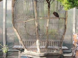 Αν αγαπάς το πουλί σου, θα του δείξεις την αγάπη σου