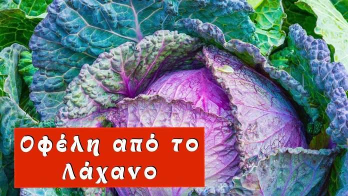 Ποια είναι τα οφέλη από το λάχανο