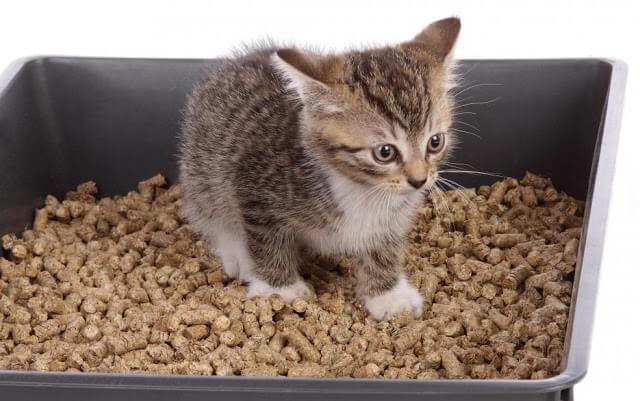 Εχετε γατάκι μέσα στο σπίτι;