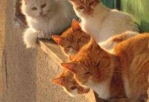 Τι κάνουν οι γάτες στο παράθυρο;