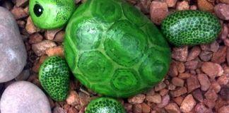 Χελώνες στα βότσαλα