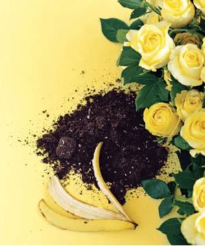 Το τέλειο λίπασμα για τα τριαντάφυλλα