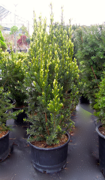 Meadow Acres Garden Centre Nursery Plants