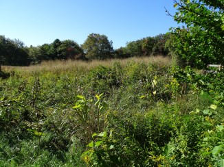 Forbs encroaching on grass, October
