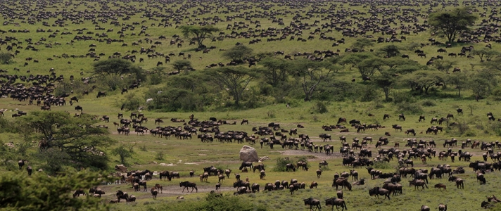 Serengeti Grazing Lessons Part V