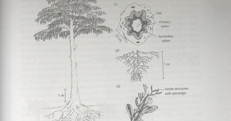History of Herbivory Part I: Before Herbivory