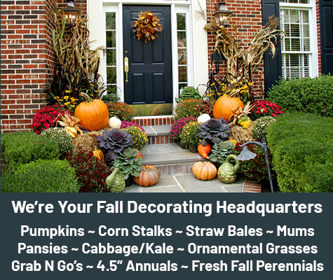 We're Your Fall Decorating Headquarters. Pumpkins ~ Corn Stalks ~ Straw Bales ~ Mums ~ Pansies ~ Cabbage/Kale ~ Ornamental Grasses ~ Grab N Go's ~ 4.5