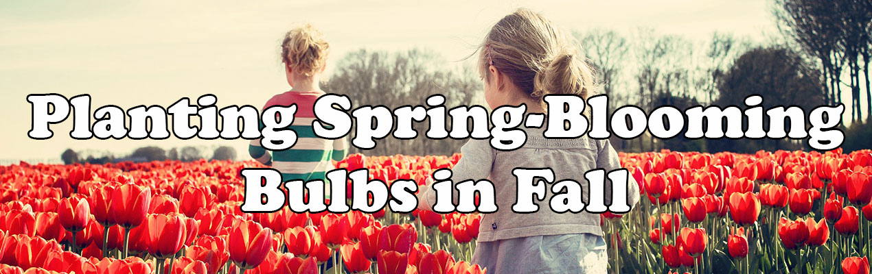 Planting Spring-Blooming Bulbs in Fall