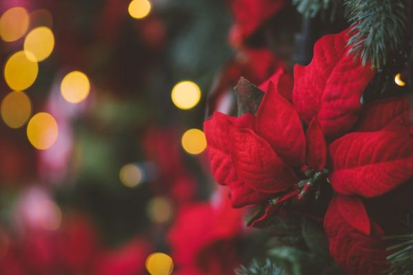 A red poinsettia accent on a Christmas tree