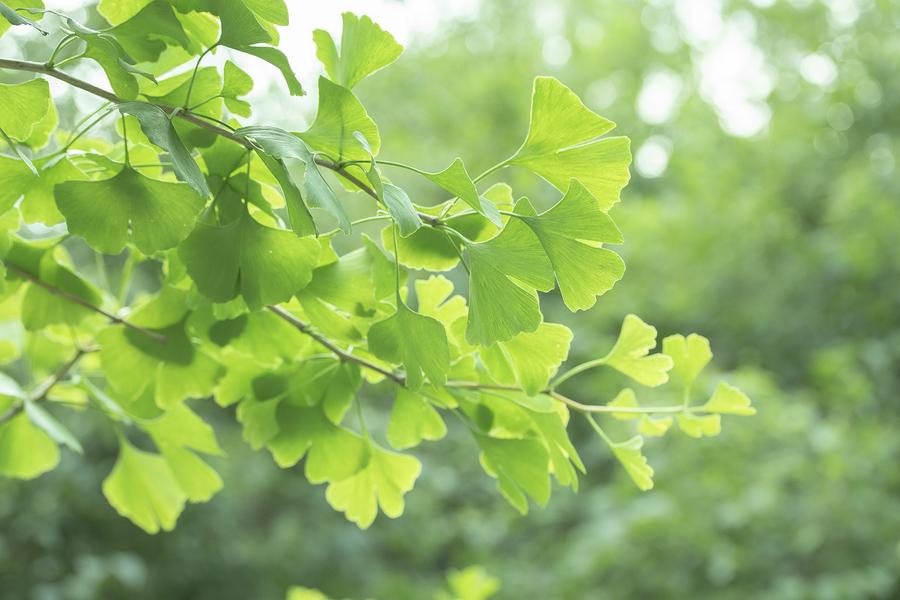 Herbal Medicine Meadows Wellbeing