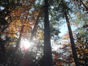 Durham, NC in November 2011