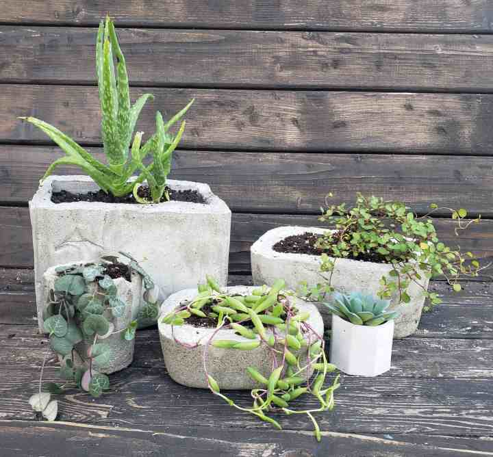 DIY Cement Planter: How to Make your Own