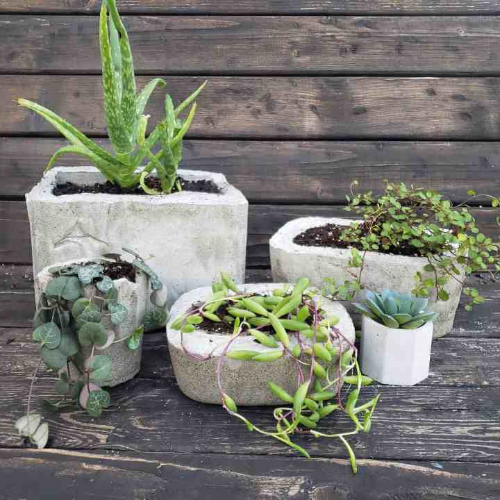 photo of homemade cement plants for a DIY Mother's Day Gifts blog post