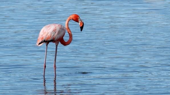 Flamingo_2.6.1