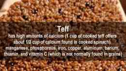 facts about teff