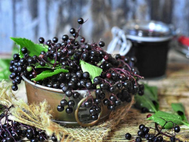 نبات البلسان هو ثمرة أنواع مختلفة من نبات السامبوكوس .