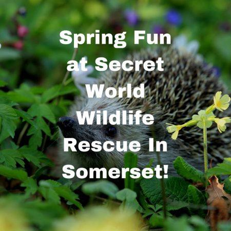 Spring Fun at Secret World Wildlife Rescue In Somerset! (2)