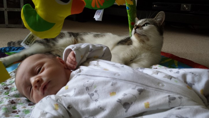 having a baby when you have cats cat kitten pets how to handle babies and pets advice