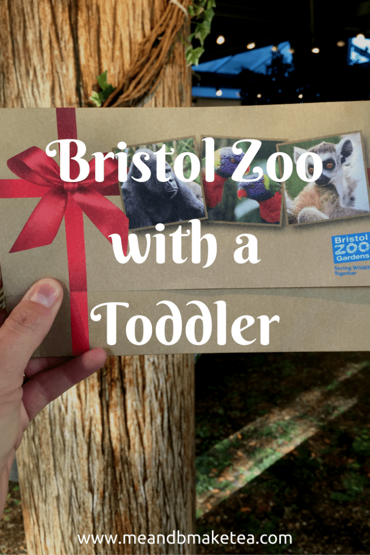 bristol zoo clifton review north somerset toddlers family day out pros and cons conservation baby hippo pygmy