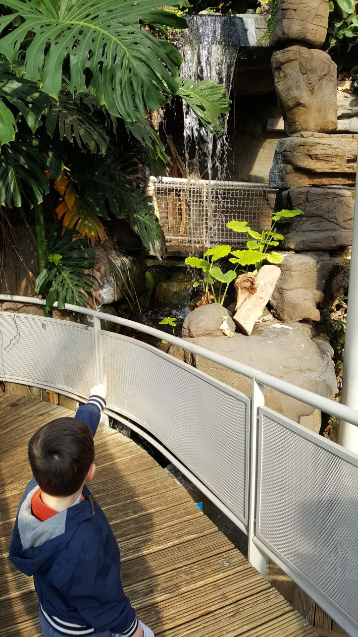 bristol aquarium review and things to do with children toddlers kids