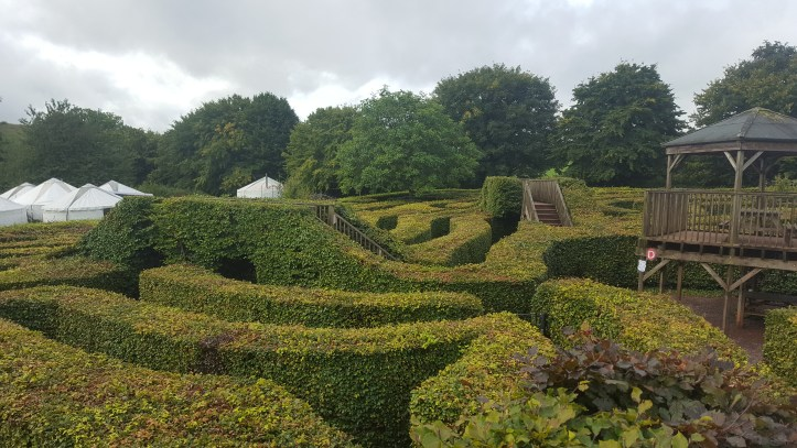 wildwood escot devon family day out outdoor playground hedge maze