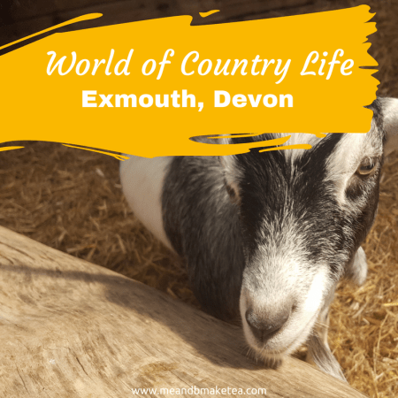 world of country life exmouth devon