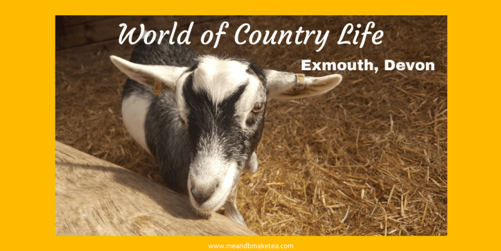 world of country life exmouth devon (1)