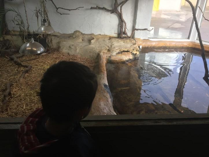 noahs ark soo farm bristol christmas nile crocodile