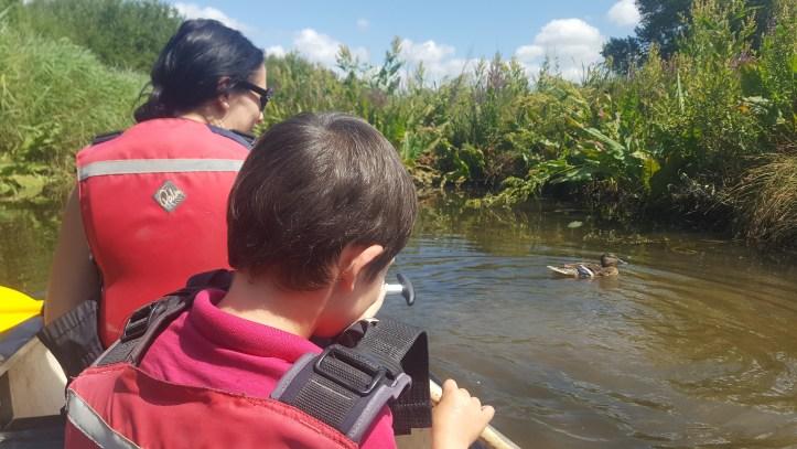 slimbridge wwt wildlife centre lego brick animal trail review post river canoe