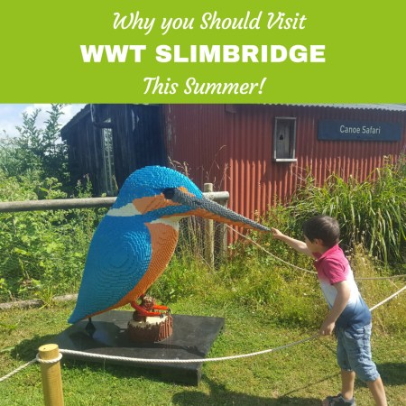 Why you should visit Slimbridge this summer and the Lego Brick animal trail (2)