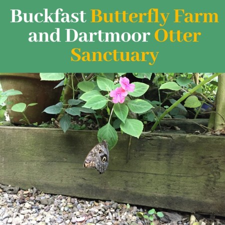 Buckfast Butterfly Farm and Dartmoor Otter Sanctuary Review of family day out