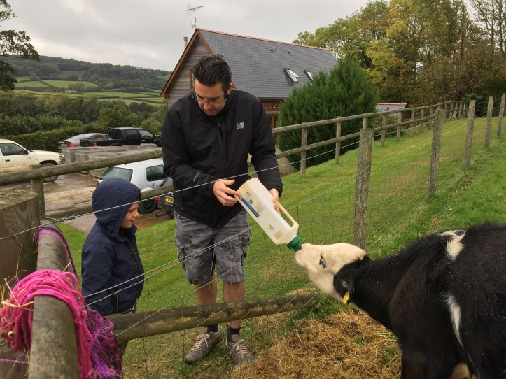 Feeding the animals at Parkers Farm Holiday Cottages & Caravans in Devon - cows