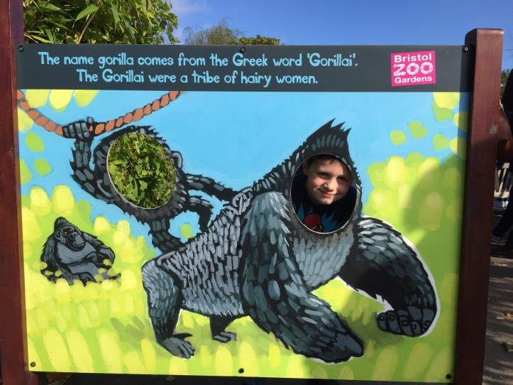 gorillas - Helf term things to do with kids at Bristol zoo