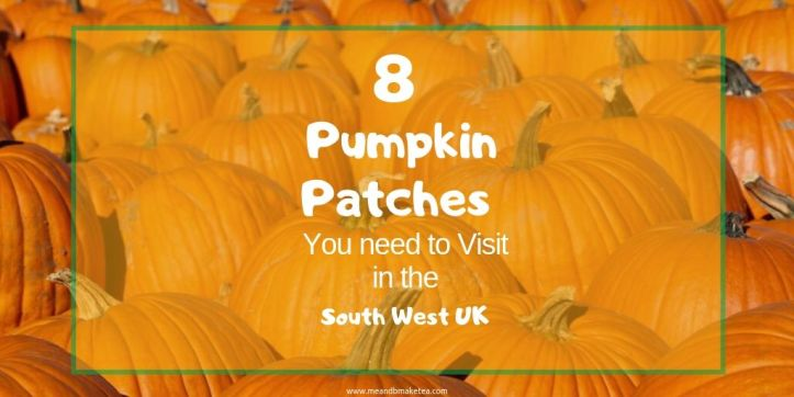 twitter-pumpkin-patches